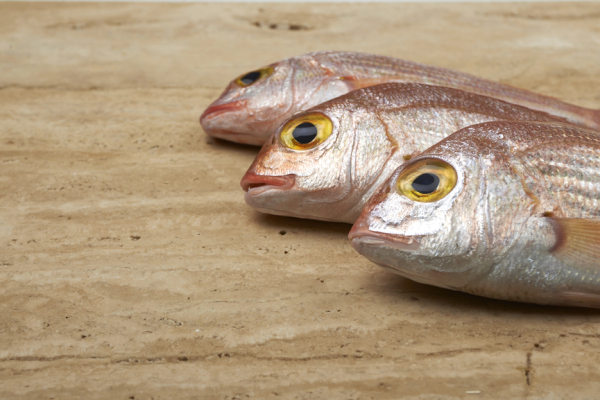 Fresh fish, red snapper