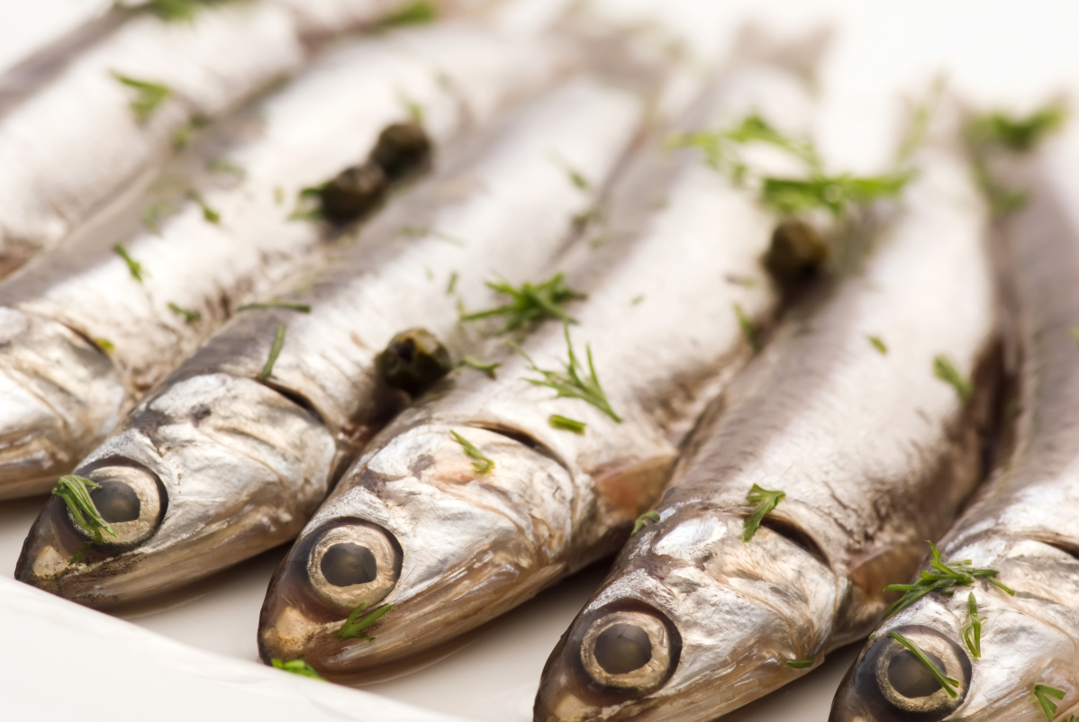 Anchovy marinated