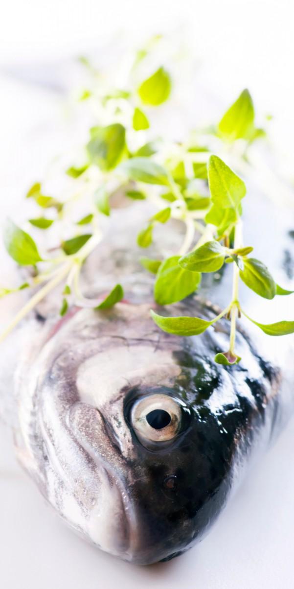 suesswasserfische
